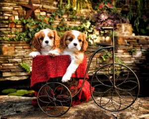 cariots of cuteness